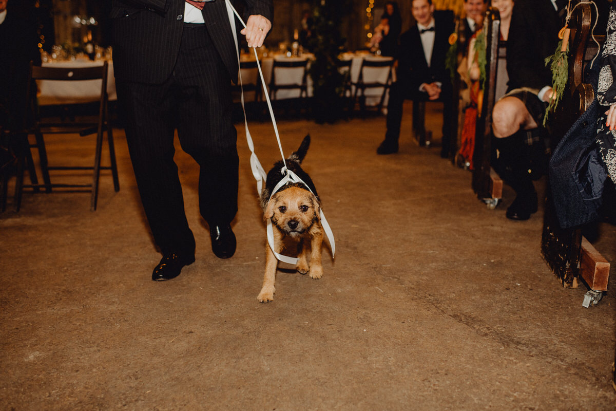 Nico the border terrier dog delivers the rings at during a wedding ceremony