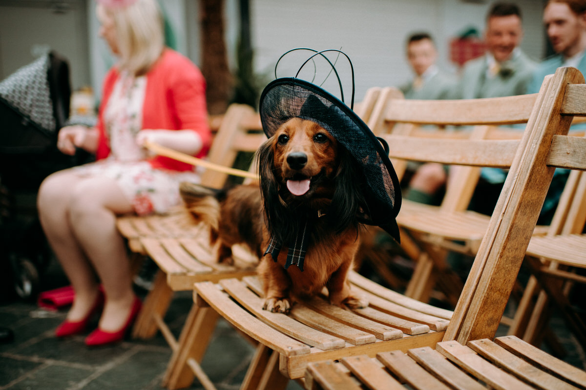 a dog wearing a wedding hat